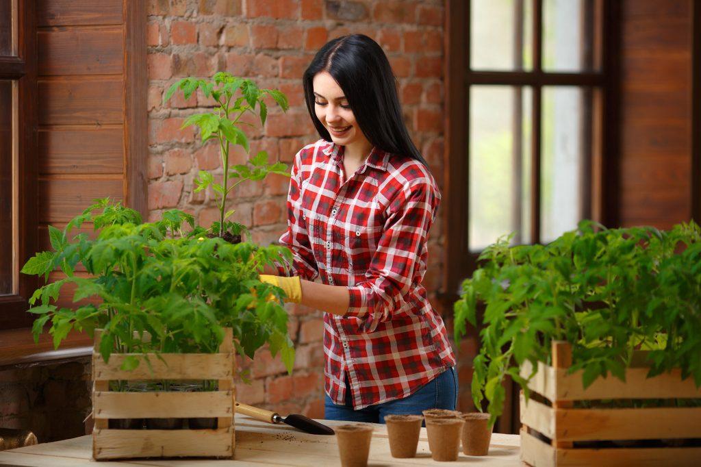 Fazendo uma horta na varanda do apartamento